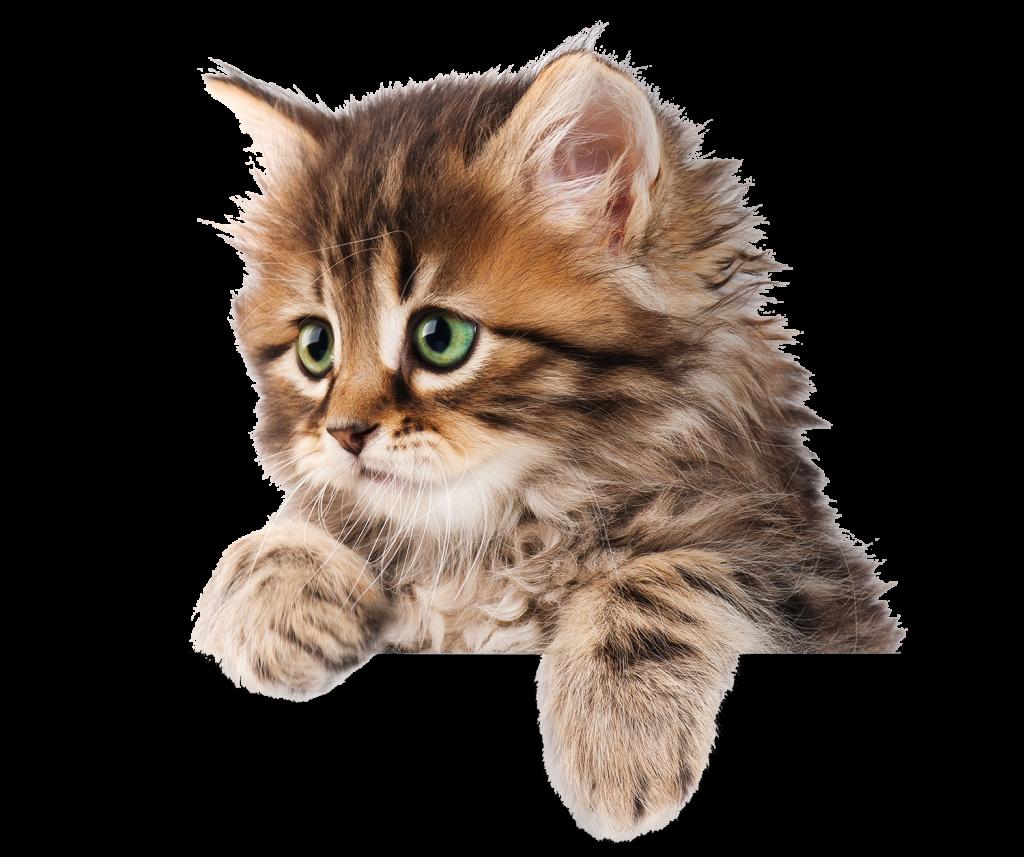 animalerie-toutou-chat