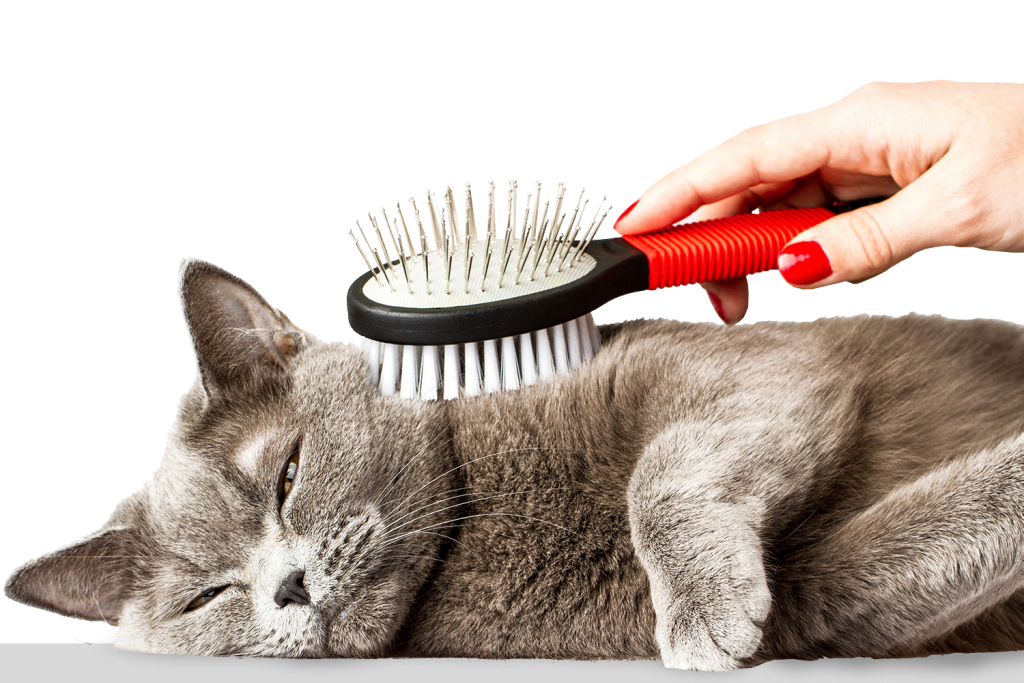 animalerie-toutou-chat-brosse