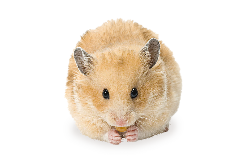 animalerie-toutou-hamster-large3