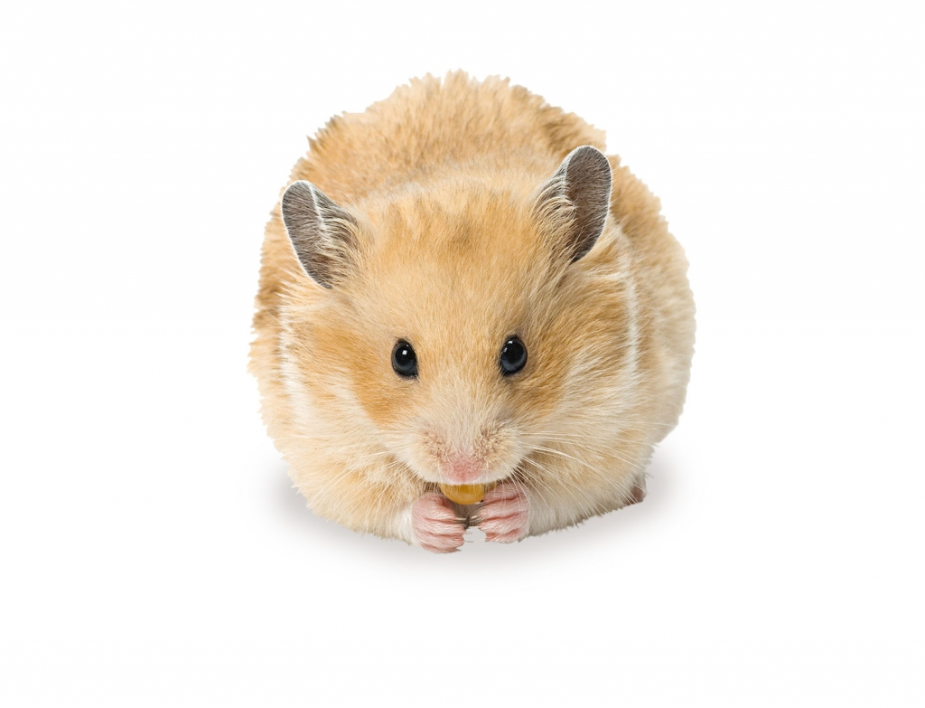 animalerie-toutou-hamster2