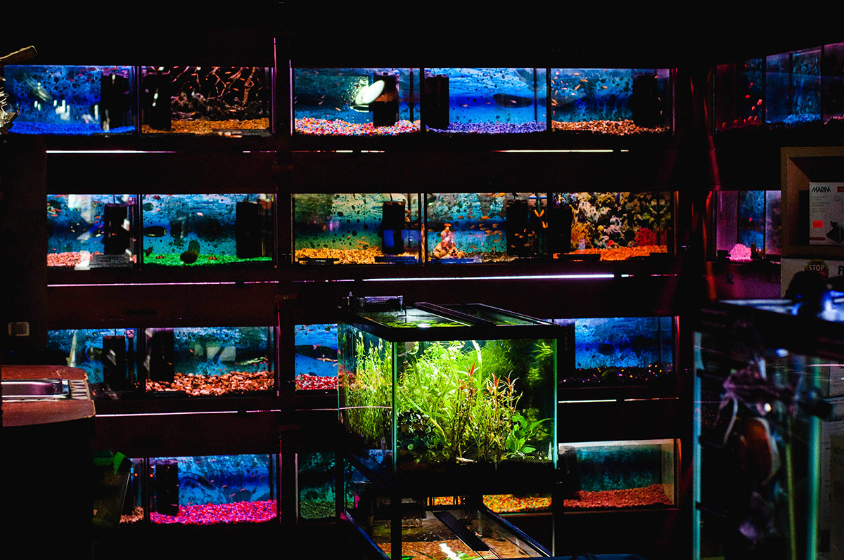 Vente de poissons animalerie toutou vaudreuil dorion for Vente aquarium poisson