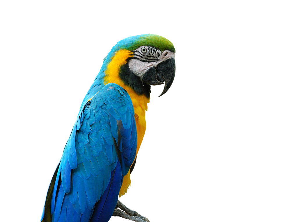 animalerie-toutou-perroquet_crop
