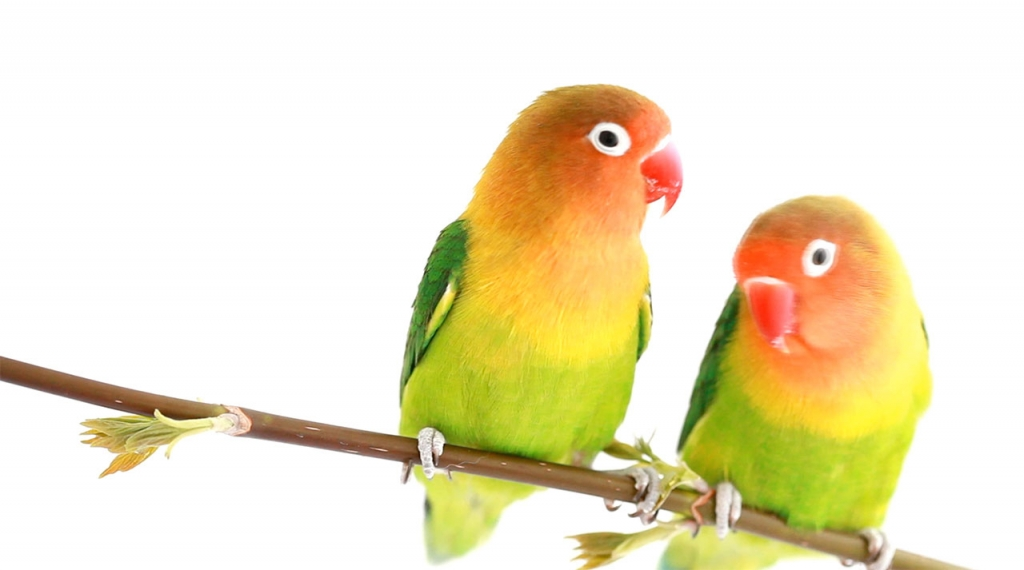 oiseaux-vid-thumbnail